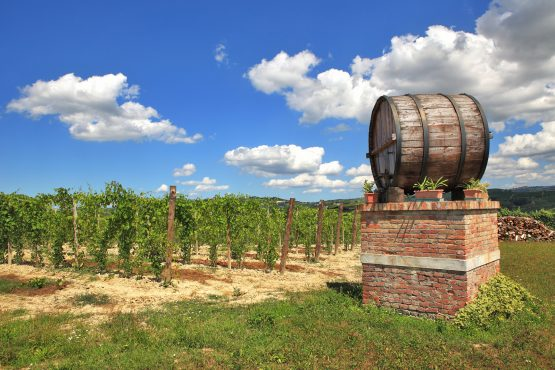 Big wooden wine cask against vineyard under beautiful blue sky with white clouds in Piedmont, Northern Italy.